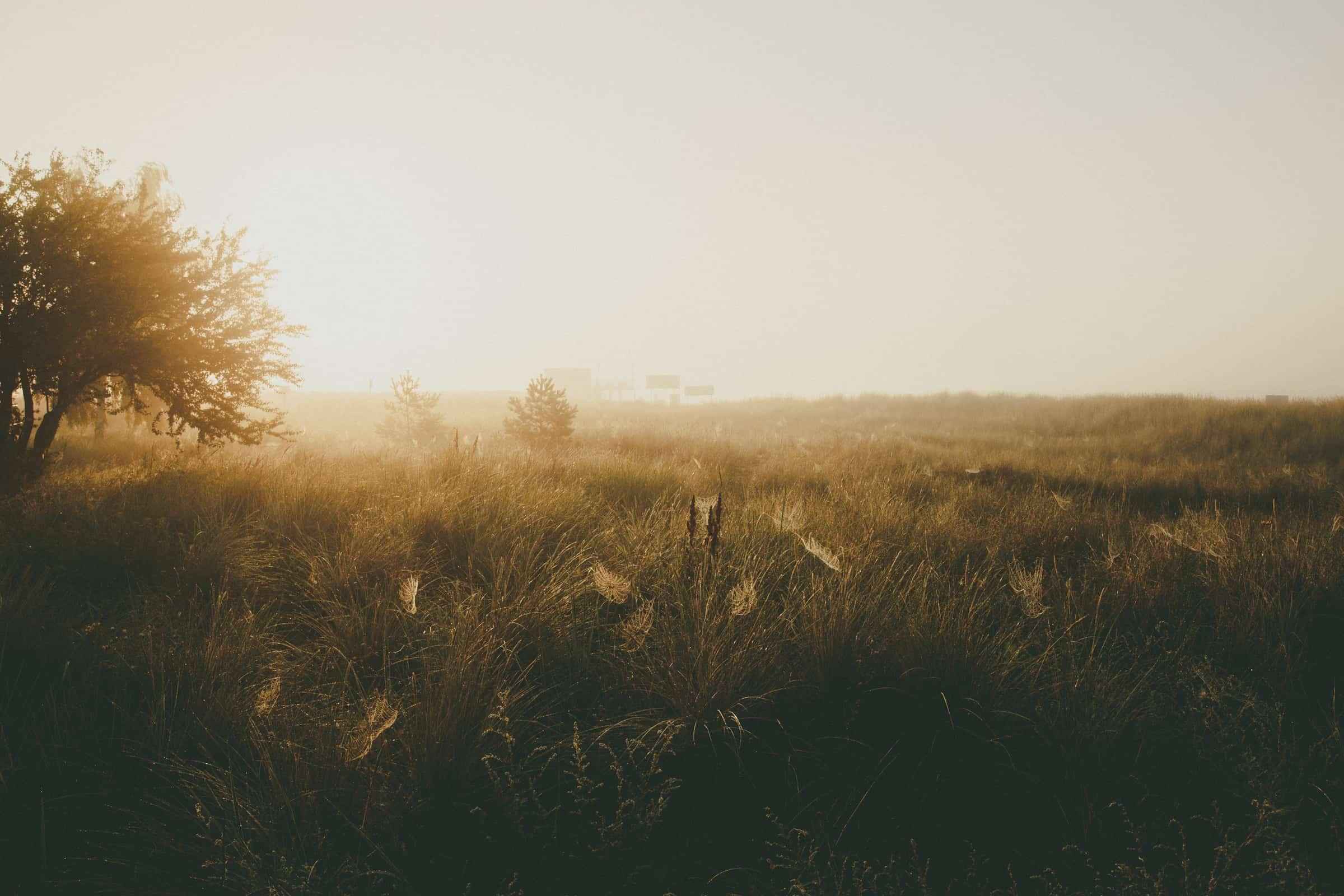 Hel plazą pajęczyny wschód słońca
